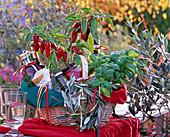 Geschenkekorb mit Capsicum (Chili), Ocimum (Basilikum)