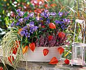 Gentiana scabra (Herbstenzian), Calluna Garden Girls