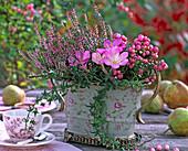 Colchicum (Herbstzeitlose), Calluna 'Annette'