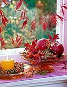 Malus (rote Äpfel), Rosa (Hagebutten), Herbstlaub von Quercus (Eiche)