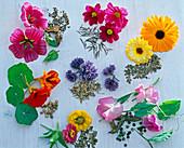 Tableau mit Sommerblumen und deren Samen im Uhrzeigersinn