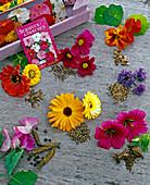 Sommerblumen und ihre Samen im Uhrzeigersinn: Tropaeolum (Kapuzinerkresse)