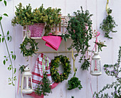 Herb shelf with thymus, wreaths of thyme, salvia