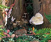 Baumpilze wachsen aus morschem Holz