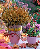 Calluna vulgaris 'Alice' (knospenblühende Sommerheide)