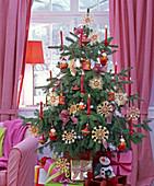 Picea pungens 'Glauca' (Blaufichte) als Weihnachtsbaum mit roten Kerzen