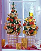 Picea glauca 'Conica' (Zuckerhutfichten) als lebende Weihnachtsbäume