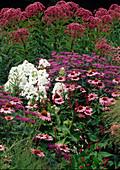 Echinacea (Purpur - Sonnenhut), Monarda (Indianernessel),