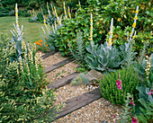 DENMANS Garden, Sussex: GRAVEL 'River' with RAILWAY SLEEPER STEPS PLANTED with Verbascum OLYMPICUM, SISYRINCHIUM STRIATUM AND FOXGLOVES.DENMANS Garden, Designer JOHN BROOKES