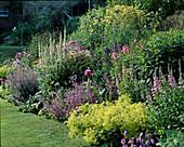 Beet (Mixed Border) mit Salvia (Salbei), Papaver somniferum (Mohn), Alchemilla (Frauenmantel), Aconitum (Eisenhut), Foeniculum (Fenchel)