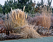 FROSTED BORDER with PHORMIUM,MISCANTHUS SP,Artemisia 'POWIS Castle',PENNISETUM ALOPECUROIDES,CORTADERIA 'PUMILA' THE Old VICARAGE, NORFOLK.