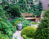 City ROOF TERRACE with LOLLIPOP Bay, NASTURTIUMS, WOODEN BENCH, GOURD GROWING On TERRACE , Box BALLS AND WOODEN BENCH. HEDENS LUSTGARD, SWEDEN