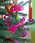Picea pungens (Stechfichte) geschmückt mit pinkem Glasvogel, Glaspilz