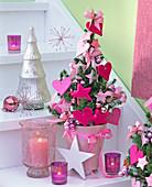 Picea glauca 'Conica' (Zuckerhutfichte) mit rosa Filzherzen
