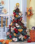 Gebundener kleiner Weihnachtsbaum aus Abies nobilis (Nobilistanne)