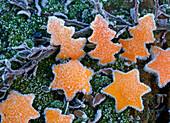 Tannenbäume und Sterne aus Schale von Citrus (Orangen) ausgestochen auf Zweig