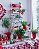 Küche mit Kräutern , rot-weiß dekoriert
