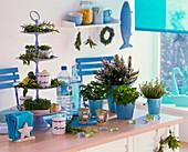 Maritime Küche in blau-weiß mit Kräutern
