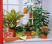 Themenfenster in orange