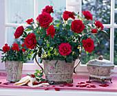 Rosa (Topfrosen, rot) in geblümten Übertöpfen am Fenster