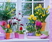 Frühlingsblumen am Fenster