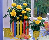 Rosa (Topfrose) in bunter Spankiste am Fenster, Schale mit Bonbons