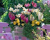 Narcissus 'Geranium' (Narzissen), Hyacinthus (Hyazinthen)
