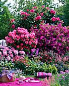 Rhododendron (Alpenrosen und Japanische Azalee)