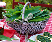 Allium ursinum (wild garlic) leaves in white basket, ciabatta