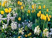 Tulipa 'Golden Apeldoorn' (Tulpen), Hyacinthus (Hyazinthen)