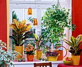 Themenfenster: Thema buntlaubige Pflanzen