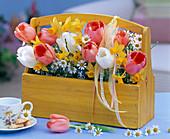 Tulipa (Tulpen), Matricaria (Kamille), Narcissus (Narzissen)