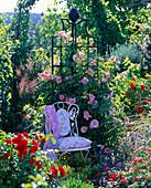 Rosa 'Kir Royal' (Kletterrose), öfterblühend, zarter Duft