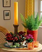 Kalanchoe blossfeldiana (Flammendes Kätchen) als Mini, Asparagus (Zierspargel)