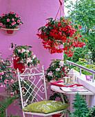 Schattenbalkon mit Begonia tuberhybrida (hängende Knollenbegonien)