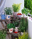 Herbal balcony, Ocimum