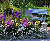 Buntes Beet mit Stauden und Sommerblumen: Delphinium (Rittersporn)