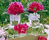 Hydrangea (Hortensien) in Gläsern mit Tortenspitze auf Tablett