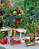 Lycopersicon 'balcony star' in empty tomato box