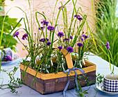 Kleine Sträuße aus Centaurea (Kornblumen), Agrostis (Straußgras)