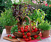 Basket with Lycopersicon, Ocimum, Ocimum Baristo