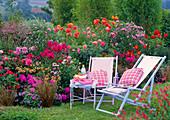 Pink - oranges Sommerbeet : Phlox paniculata (Flammenblumen)