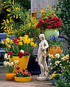Pflanzentreppe mit Azalea, Narcissus-Hybr. 'Golden Harvest', Muscari,