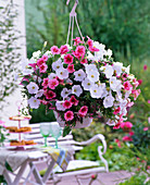Ampel mit Petunia 'Strawberry Frost' 'White Improved'