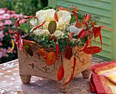 Brassica (Zierkohl) in handgetöpferter Keramik