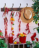 Capsicum hung to dry on the coat hangers