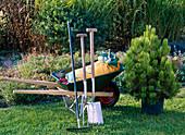 Zutaten zum Pflanzen von Pinus leucodermis (Schlangenhautkiefer)