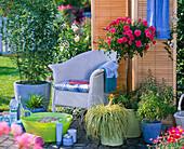 Wellness - Terrasse mit Rosa (Rosenstämmchen), Carex 'Evergold' (Buntsegge)