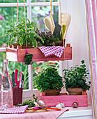 Kräuter am Fenster : Salvia (Salbei), Thymus (Thymian) auf Hängetablett