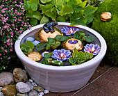 Mini - Teich mit Pistia (Wassersalat), Eichhornia